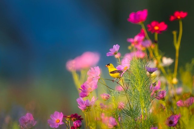 Picture of a small yellow bird on some purple flowers in nature